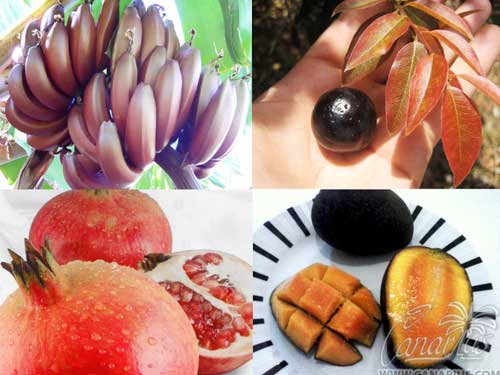 Superfood-Fruit-Trees