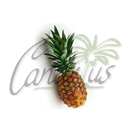 ananas-comosus-cv-md-2-pineapple