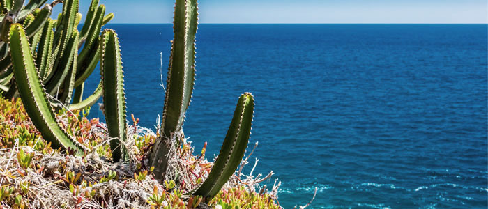 succulent-plants-in-the-canary-islands