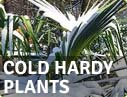 Buy online our cold hardy plants