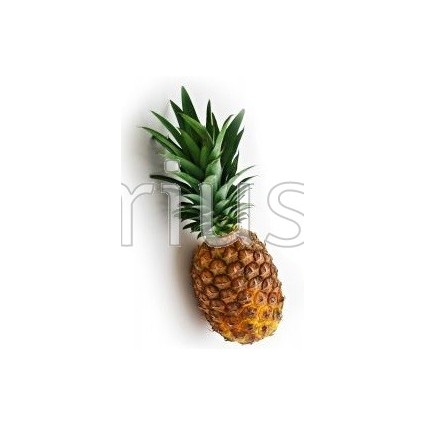 Ananas comosus  'MD-2' - Pineapple