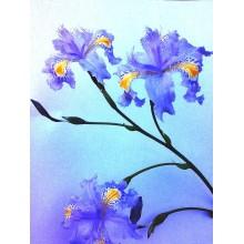 Iris japonica - Blue Form