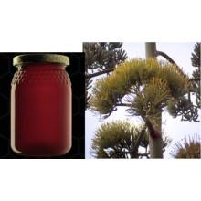 Miel d' abeille d' Agave americana