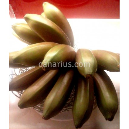 Musa 'Figue Rose Naine' - Dwarf Red Banana