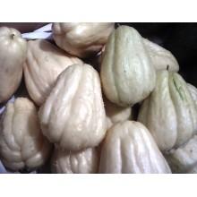 Sechium edule 'White' - White Chayote