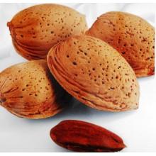 Prunus dulcis 'Guara' - Almond