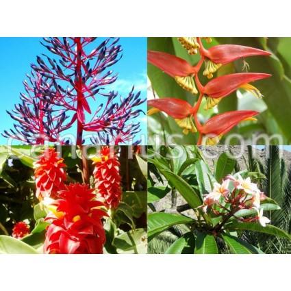 Pack - Flores super vistosas