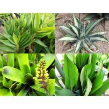 Pack - Plantes Vivaces Résistantes