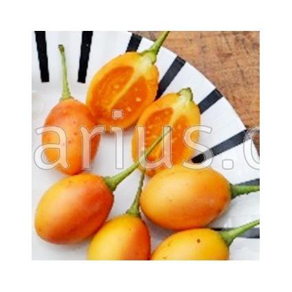 Solanum betaceum 'Red' - Baumtomate , Tamarillo