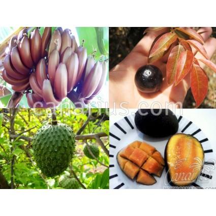 Pack - Alberi da frutto Superfood
