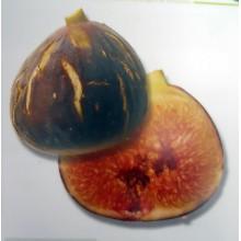 Ficus carica 'Higuera negra' - Canarian Fig