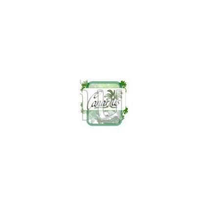 Jasminum azoricum - Lemon-Scented Jasmine