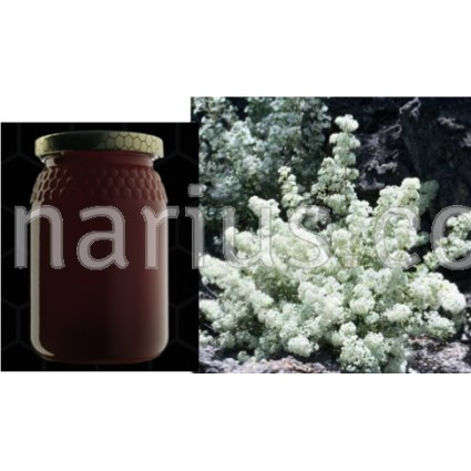 Miel de Poleo- Bystropogon origanifolius