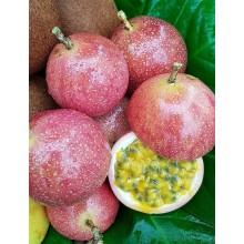 Passiflora edulis 'BRS Rubi do Cerrado' F1