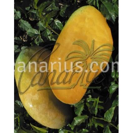 Mangifera indica cv. ' Edward '