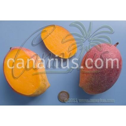 Mangifera indica cv. ' Van dike '