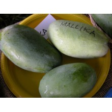 Mangifera casturi - Kasturi