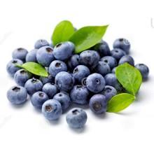 Vaccinium corymbosum - Blueberry