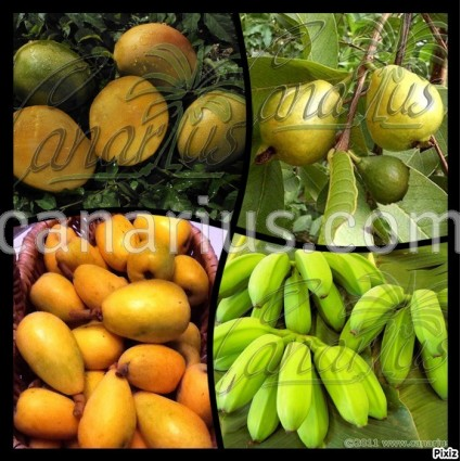 Pack - Subtropical Fruit Trees