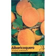 Prunus armeniaca 'Rojo Carlet' -Apricot