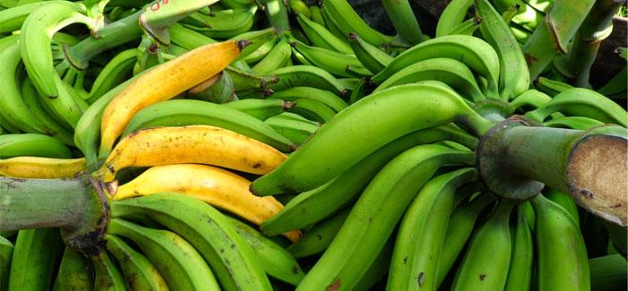 Curare-enano-banana