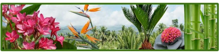Piante esotiche online canarius for Plantas exoticas online