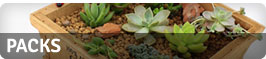 Buy online our exotic plants packs