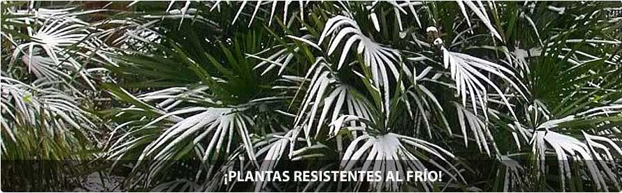 ¡Plantas resistentes al frío!