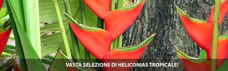 vasta selezione di heliconias tropicale!