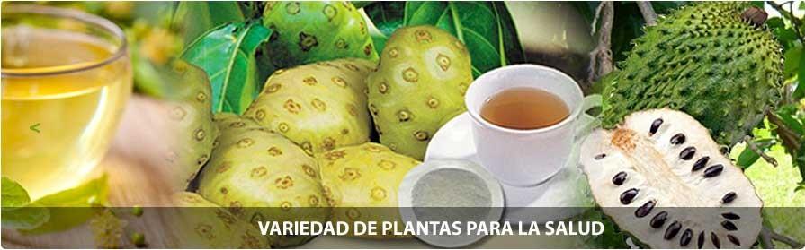 Catálogo de plantas para la salud