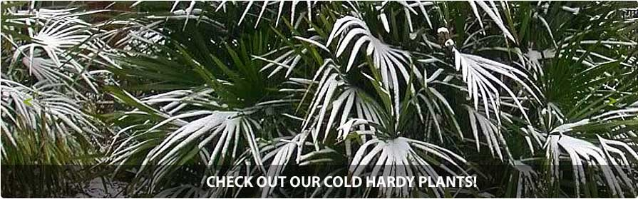 Check out our cold-hardy plants!