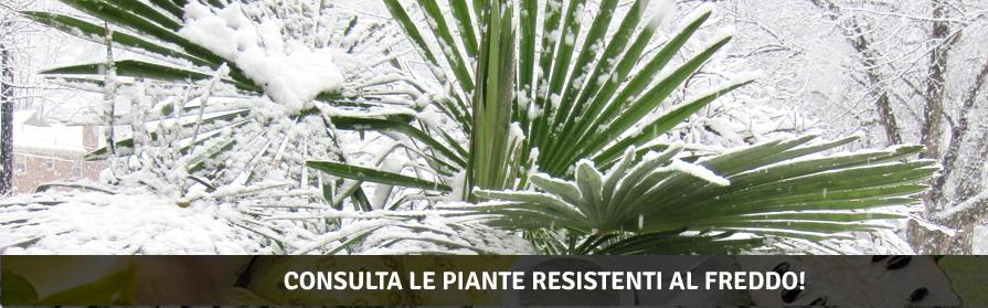 Consulta le piante resistente al freddo!