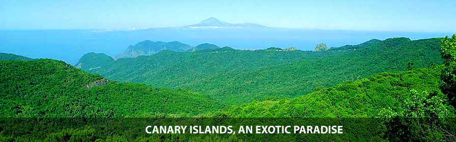 Canary Islands, exotic plants paradise